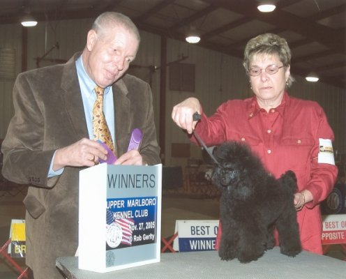 Barclay Miniature And Toy Poodles Breeder With Akc Poodle